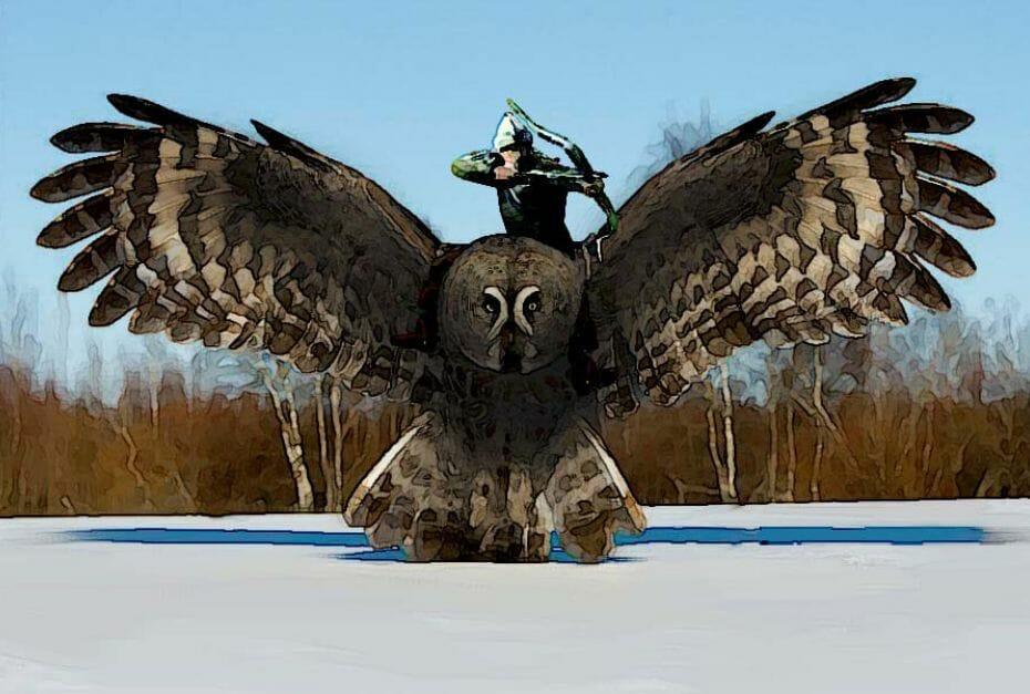 Volant - owl