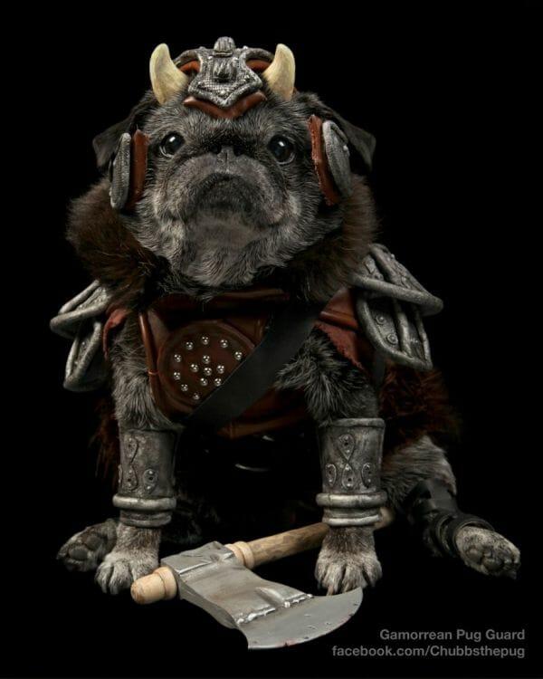 chubbs-gamorrean-guard-pug