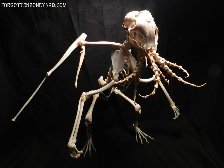 Bone Cthulhu 3