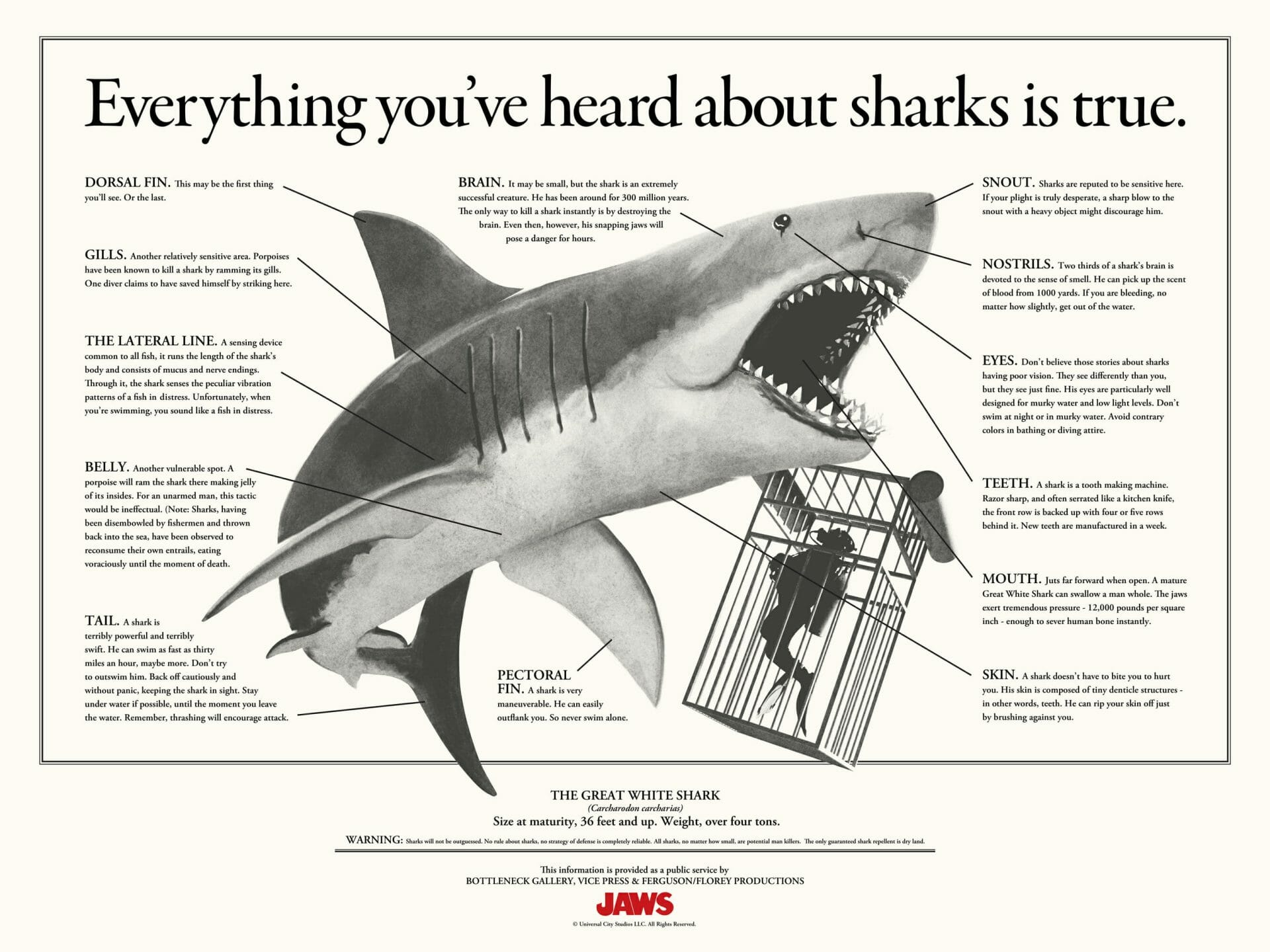 Everything you've heard about sharks is true