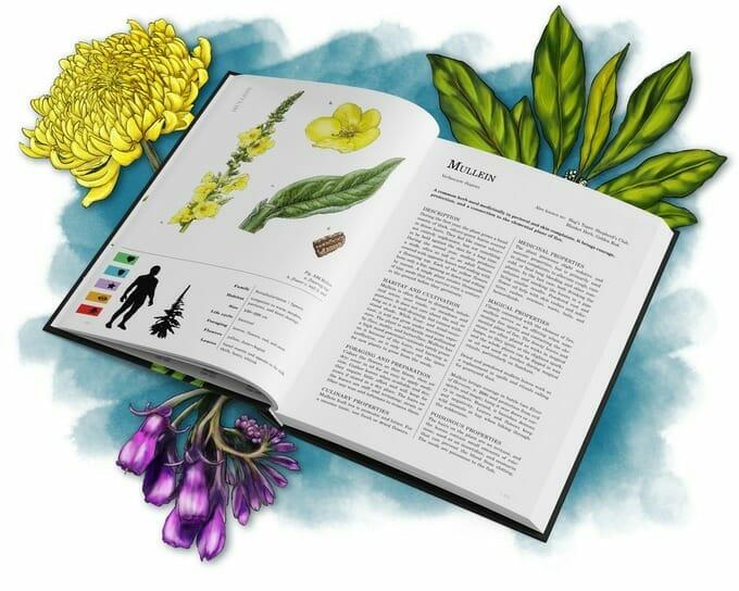 Herbalist's Primer